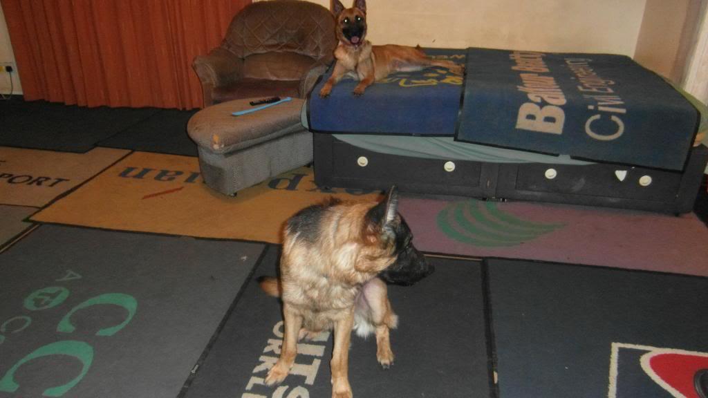 Riley 22 months  SAM_0333_zpsdf0db749