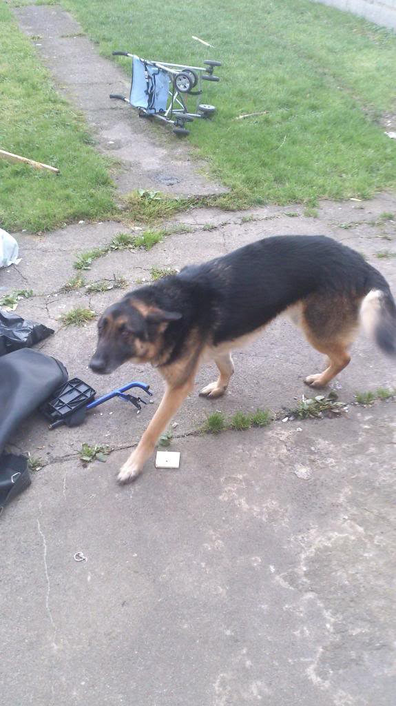 Ty 4yr old in Ireland Tyson-gs2_zps98d9315a