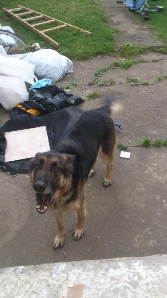 Ty 4yr old in Ireland Tyson-gs3_zps78460a74