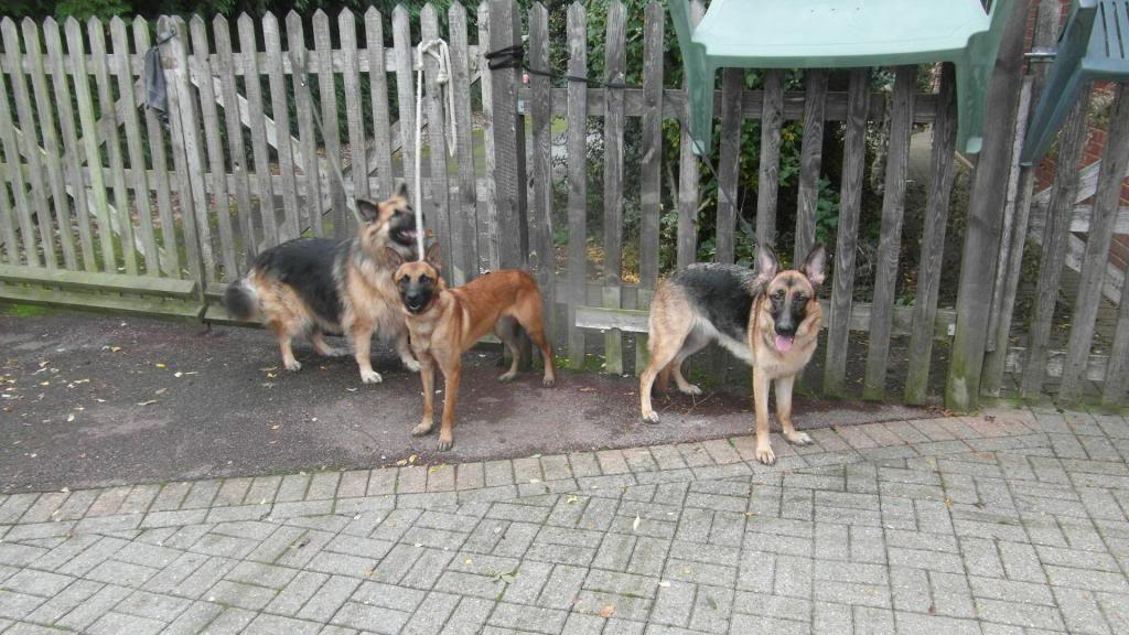 Ruby 18 month old homed RubyrexCloe001_zps44ad410b
