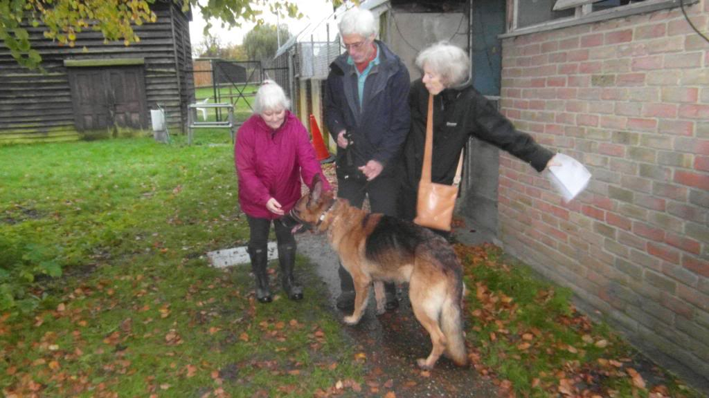 Caesar 6 year old; black and tan male homed Treetopstoday004_zpsf047ca13