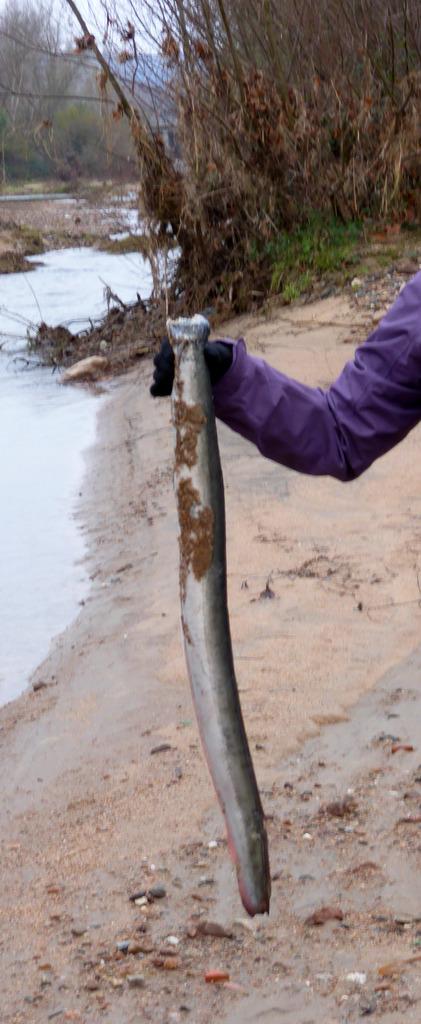 Un paseo bichero por la Tordera Anguila_zpsjch2olun