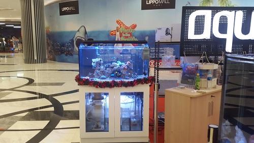Event biota laut Indofishclub bersama Lippo Mall Puri 1%204_zpskbkizhr0