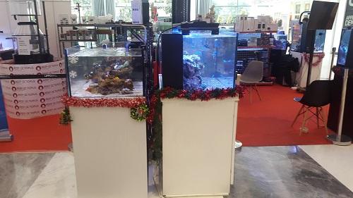 Event biota laut Indofishclub bersama Lippo Mall Puri 1%205_zpsesuefbn1