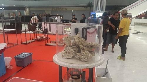 Event biota laut Indofishclub bersama Lippo Mall Puri 4_zpsbx3o5efh