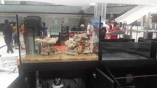 Event biota laut Indofishclub bersama Lippo Mall Puri 6_zpsfgwvqesy