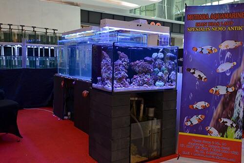 Event biota laut Indofishclub bersama Lippo Mall Puri IMG-20151127-WA0013_zpsyejhbck2