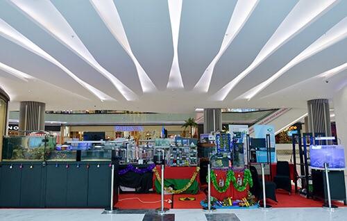 Event biota laut Indofishclub bersama Lippo Mall Puri IMG-20151127-WA0016_zpsil4guc0m