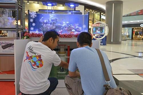 Event biota laut Indofishclub bersama Lippo Mall Puri IMG-20151127-WA0017_zpsvktihmef