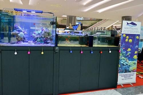 Event biota laut Indofishclub bersama Lippo Mall Puri IMG-20151127-WA0025_zpscxmywxje