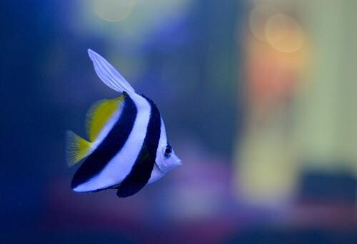 Event biota laut Indofishclub bersama Lippo Mall Puri IMG-20151128-WA0008_zpsvo4xwkks