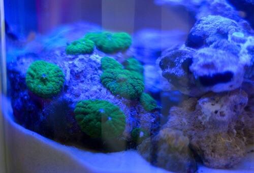 Event biota laut Indofishclub bersama Lippo Mall Puri IMG-20151128-WA0011_zpstyva8rnu