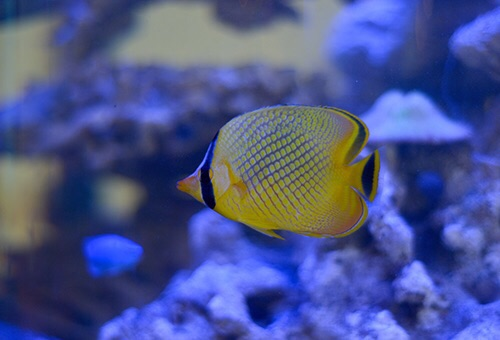 Event biota laut Indofishclub bersama Lippo Mall Puri IMG-20151128-WA0012_zpsfhzfeuau