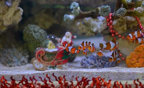 Event biota laut Indofishclub bersama Lippo Mall Puri IMG-20151128-WA0014_zps0zq3vvp3