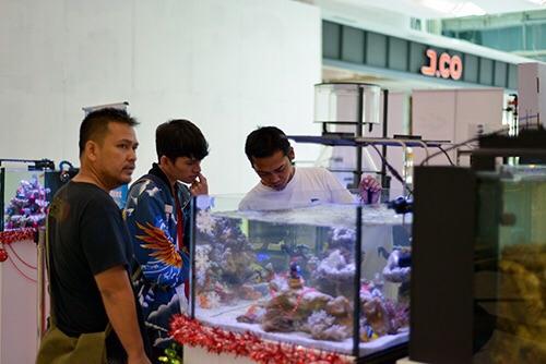 Event biota laut Indofishclub bersama Lippo Mall Puri IMG-20151128-WA0016_zpsviwatpyk