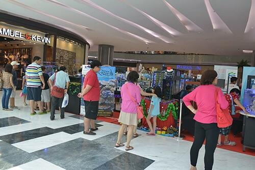 Event biota laut Indofishclub bersama Lippo Mall Puri IMG-20151128-WA0018_zps1nja6eor