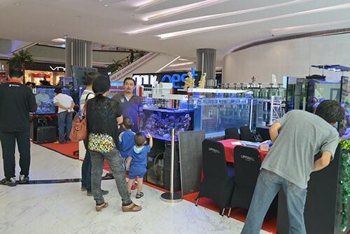 Event biota laut Indofishclub bersama Lippo Mall Puri IMG-20151128-WA0020_zpswvkbvamu