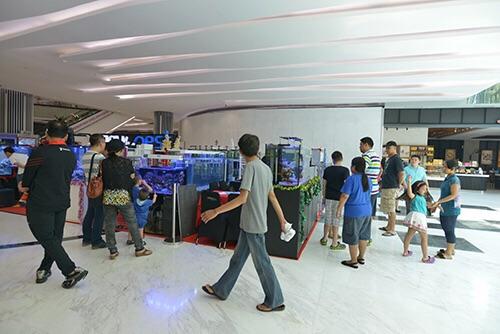 Event biota laut Indofishclub bersama Lippo Mall Puri IMG-20151128-WA0022_zpsxd09jjvt