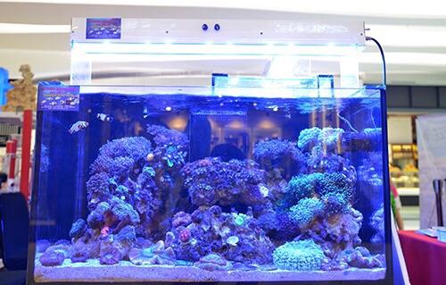 Event biota laut Indofishclub bersama Lippo Mall Puri IMG-20151128-WA0028_zps2scx5y6n