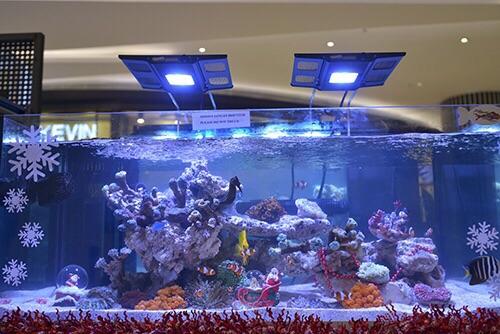 Event biota laut Indofishclub bersama Lippo Mall Puri IMG-20151128-WA0029_zpsezfxrelh