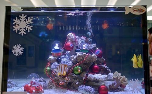 Event biota laut Indofishclub bersama Lippo Mall Puri IMG-20151128-WA0030_zpsq4jpeg7i