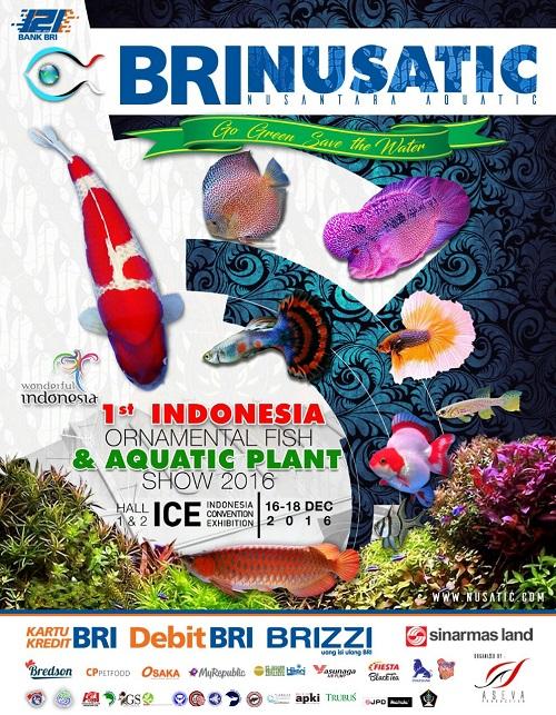 Event biota laut Indofishclub bersama NUSATIC IMG-20161204-WA0003_zpstz7f3rpl