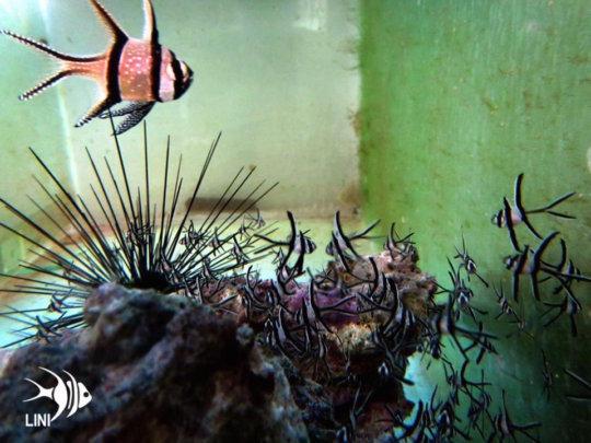 Help communities through sustainable Aquaculture Ph_grid7_22218_80609_zps7mwzexc5