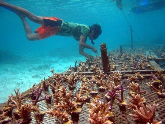 Help communities through sustainable Aquaculture Ph_grid7_22218_80610_zpsflajgb6g