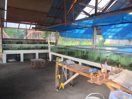 Help communities through sustainable Aquaculture Ph_grid7_22218_80613_zpsltcuihdu