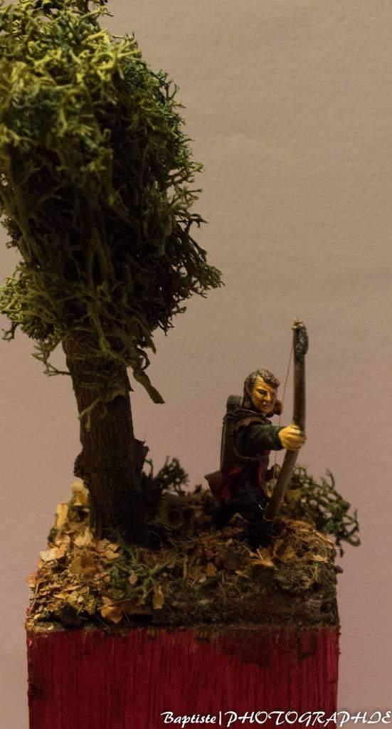 Archer dans les bois  IMG_3614_zps8bmzbpoj
