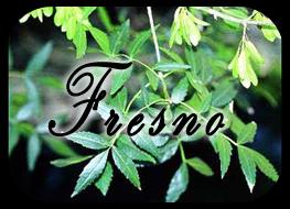 ¡¡a por mi tesoro!! Fresno02_zps51a873ab