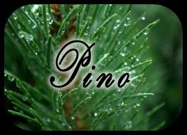 varita ven a mi :P Pino01_zpsd5d7bc86