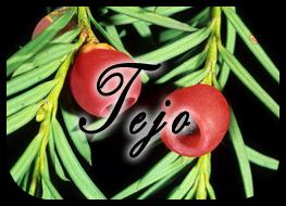 Una varita para Isabella  Tejo02_zps989eede0
