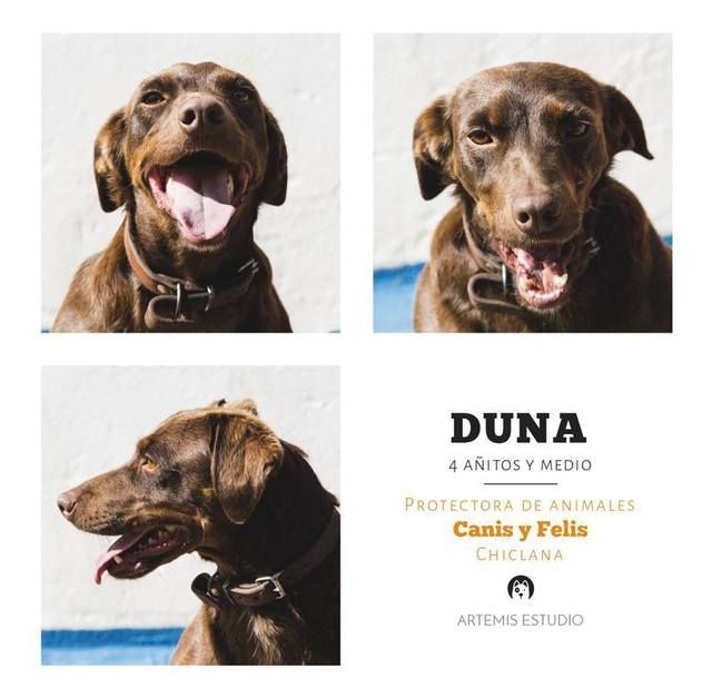 Canis - Duna 10423794_10205803551000238_8610686919680437902_n_zpszjd3vlo0
