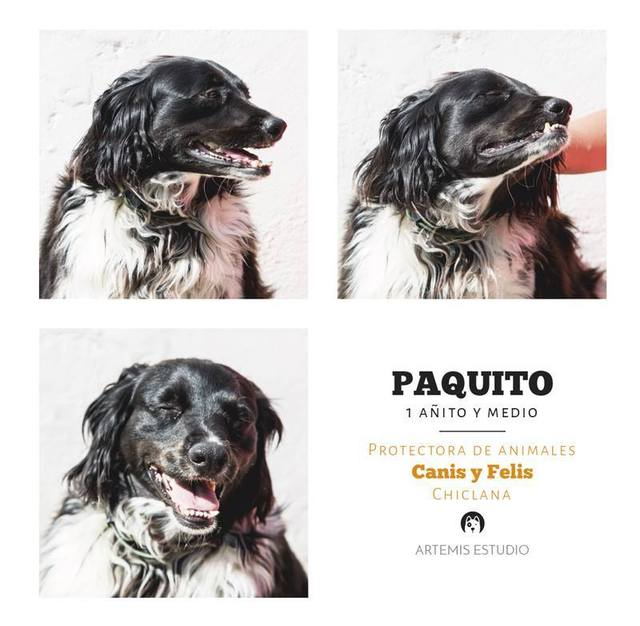 Canis - Paquito  11235045_10205803439277445_6286944946791374450_n_zpsj9dwtvpz