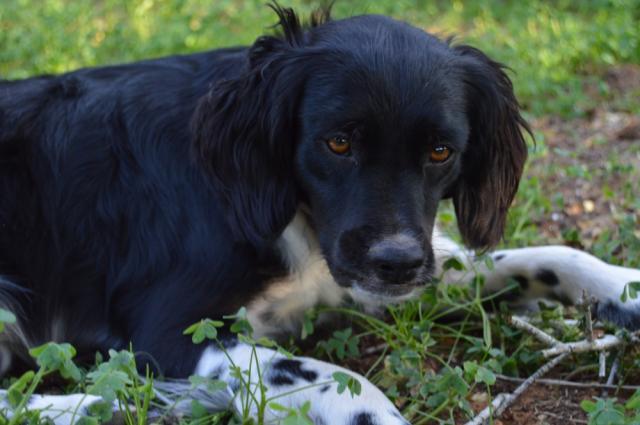 Canis - Paquito  DSC_0199Paquito_zpseaa1b554
