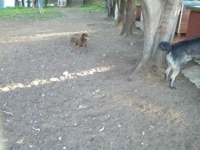 Canis - Duna Duna_zpslk6bvfw1