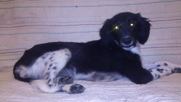 Canis - Paquito  IMG-20131025-WA0008Paquito_zps24492dcb
