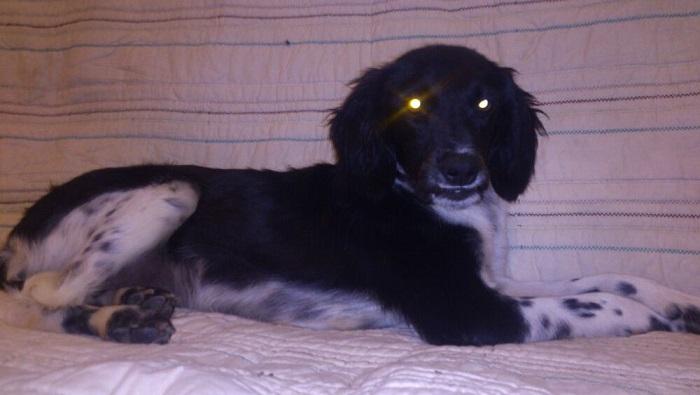 Canis - Paquito  IMG-20131025-WA0011Paquito_zpsdc3d727b