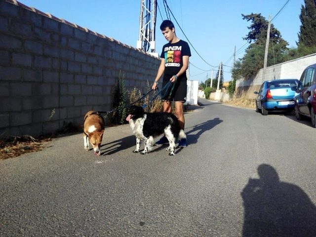 Canis - Paquito  Tayson%20en%20paquito1_zpsmfl6xfng