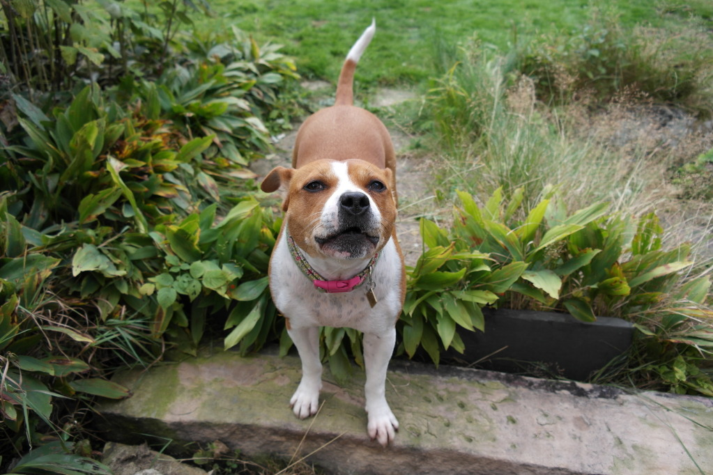 A few pics of Daisy, taken with my new camera!  SAM_0078_zps8ef9a9eb