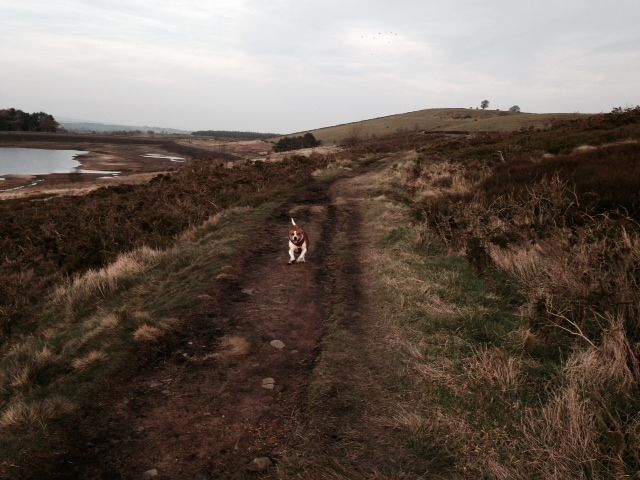 Pics from this afternoons walk (pic heavy!) Photo_zps0b10843a