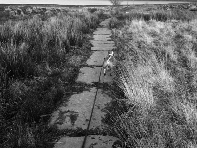 Pics from this afternoons walk (pic heavy!) Photo_zpsae0ee0f0
