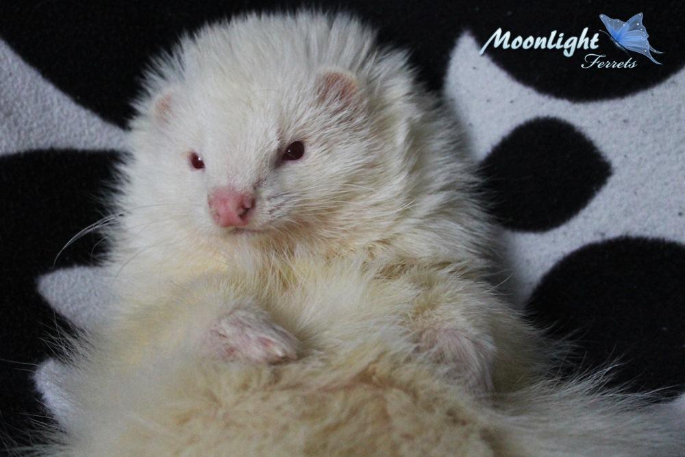 Moonlight Ferrets - videos 08-07 pag. 5 - Página 3 IMG_0471_zps7bafcb19