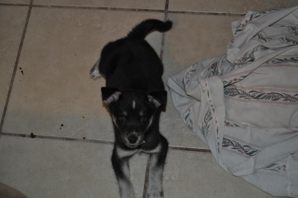 Zoe, From birth to present DSC_1000_zpsff821857
