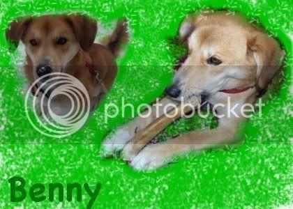 MessrMoony's Avatars and Signatures Bennysig2