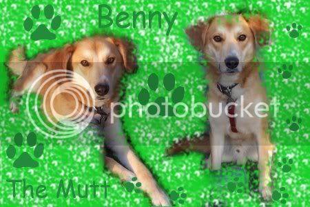 MessrMoony's Avatars and Signatures Bennysig4