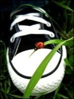 Macy avatarid Ladybug_by_Siriusjb