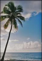 Macy avatarid Palm_Tree_by_throughherlens