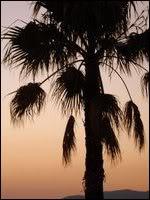 Macy avatarid Palm_tree2_by_Monika_30